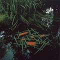 1987-Goldsworthy-Andy-Laid-iris-blades-on-pond