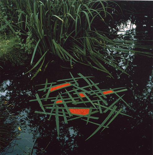 1987-Goldsworthy-Andy-Laid-iris-blades-on-pond.jpg